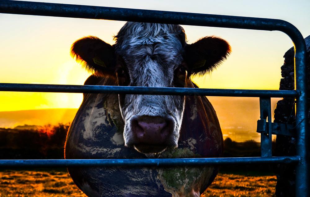 J'arrête de manger des animaux… pour préserver la vie sur Terre et donc la mienne !